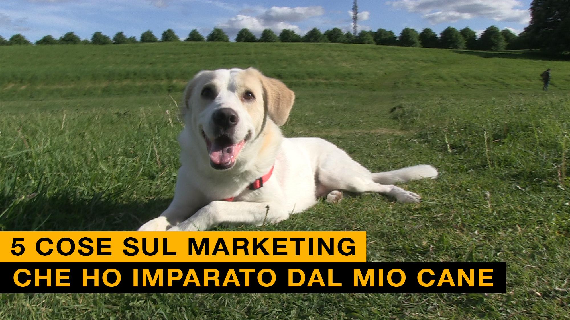 Marketing Cane
